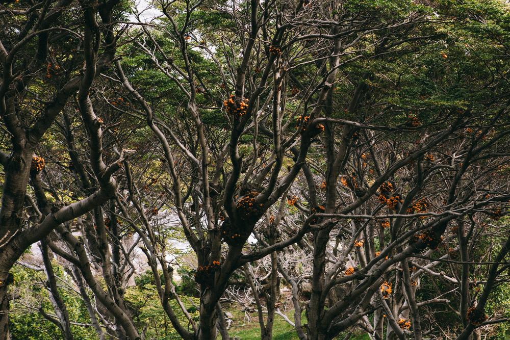 201411-ushuaia-1.jpg