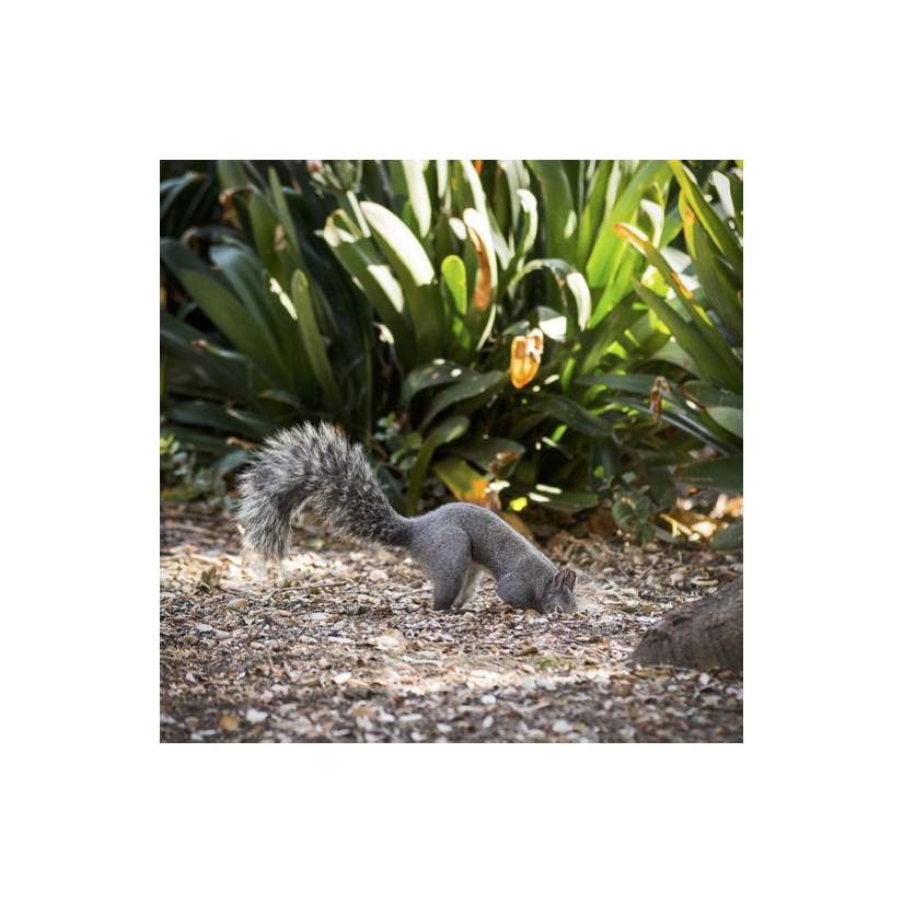 Squirrels4.jpg