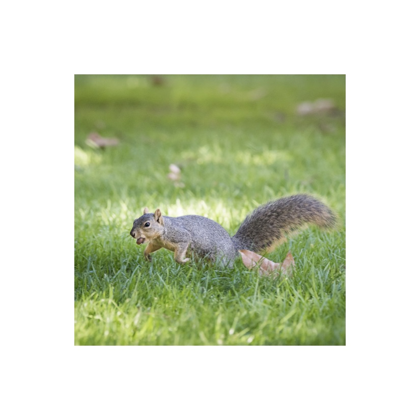 Squirrels12.jpg