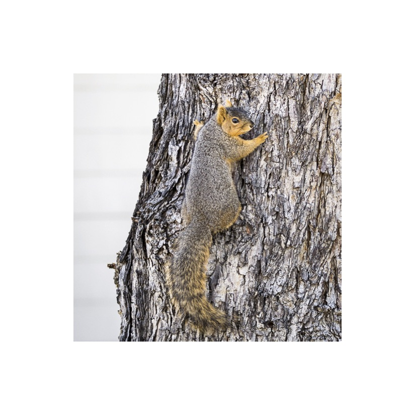 Squirrels25.jpg
