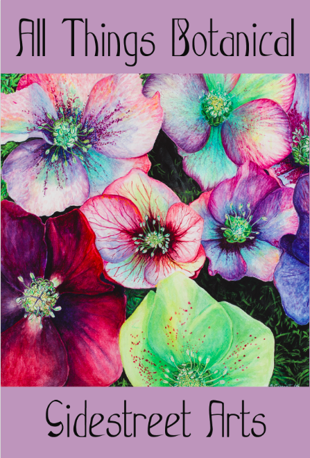The Hellebores.png