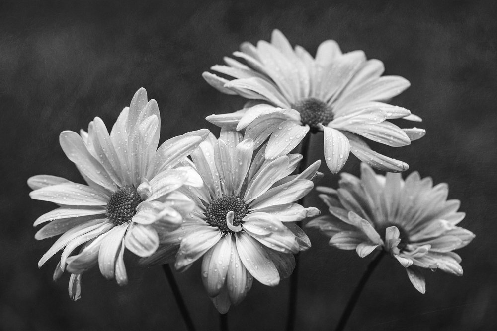 It's a Daisy Quartet