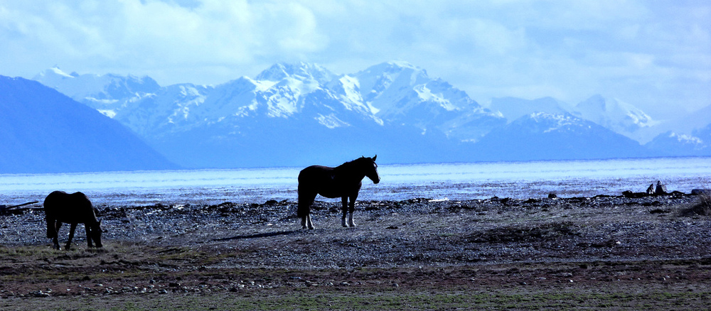 Horses with mountains in the background in Patagonian Chile. By Gonzalo Baeza H. Available here.