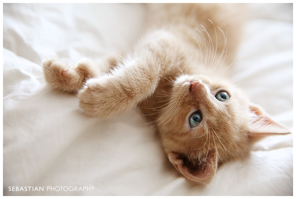 Sebastian_Photography_Pet_Pictures_Cat_Kitten_GreenEyes.jpg