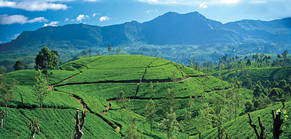 ceylon-tea-country-tea-trails-srilanka.jpg