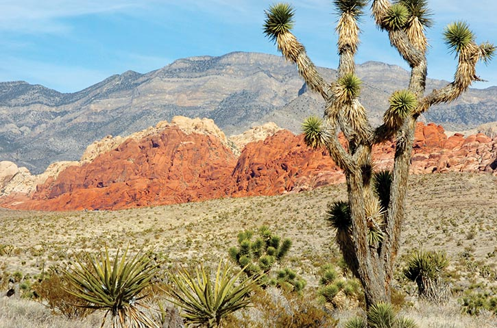 Get out and enjoy the beauty of the desert, just a short drive from the city's centre.