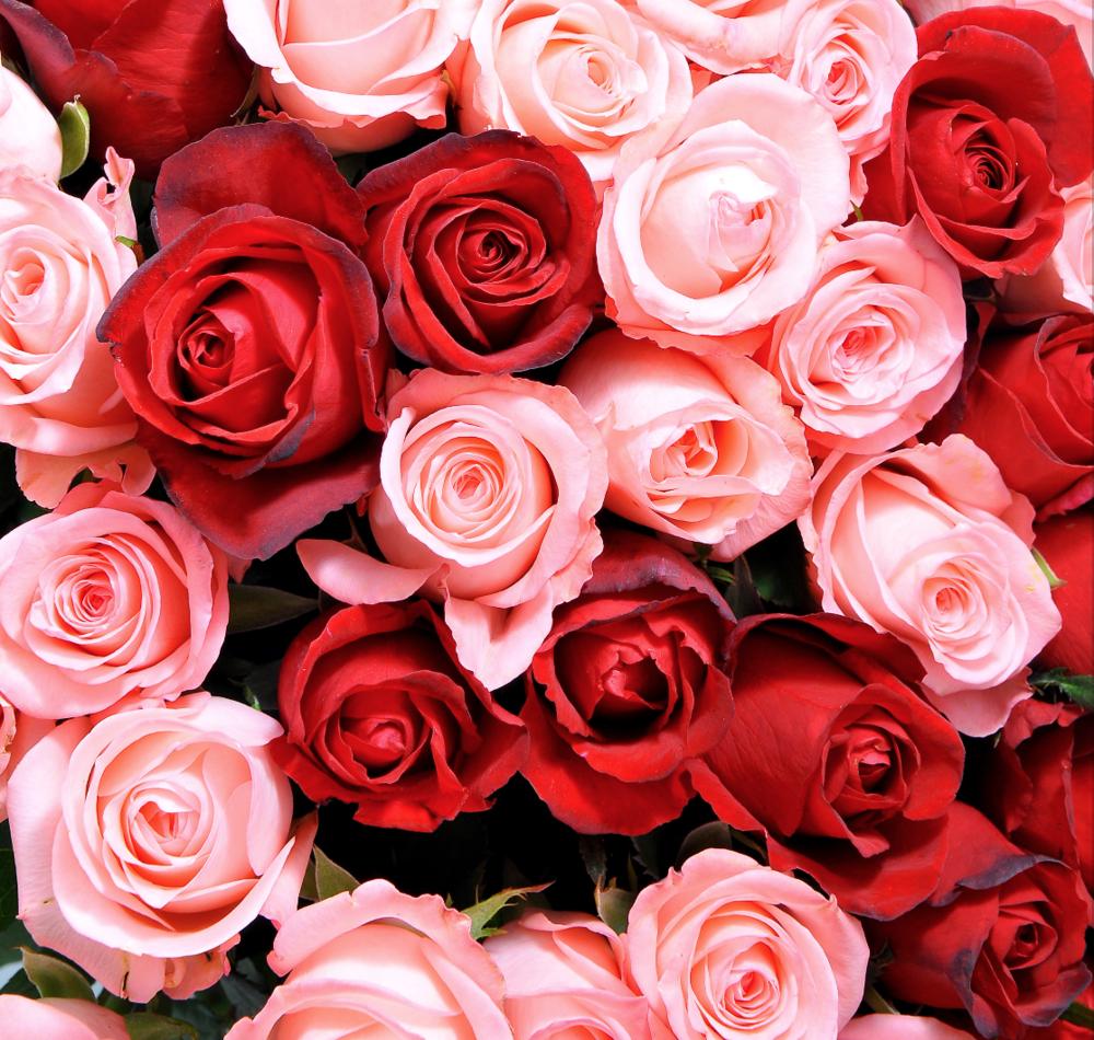 A Bouquet of Roses Vancouver Florist
