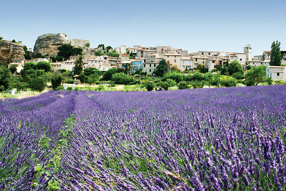 Grasse is surrounded by endless fields of lavender (pictured), jasmine, and other summer-blooming flowers.