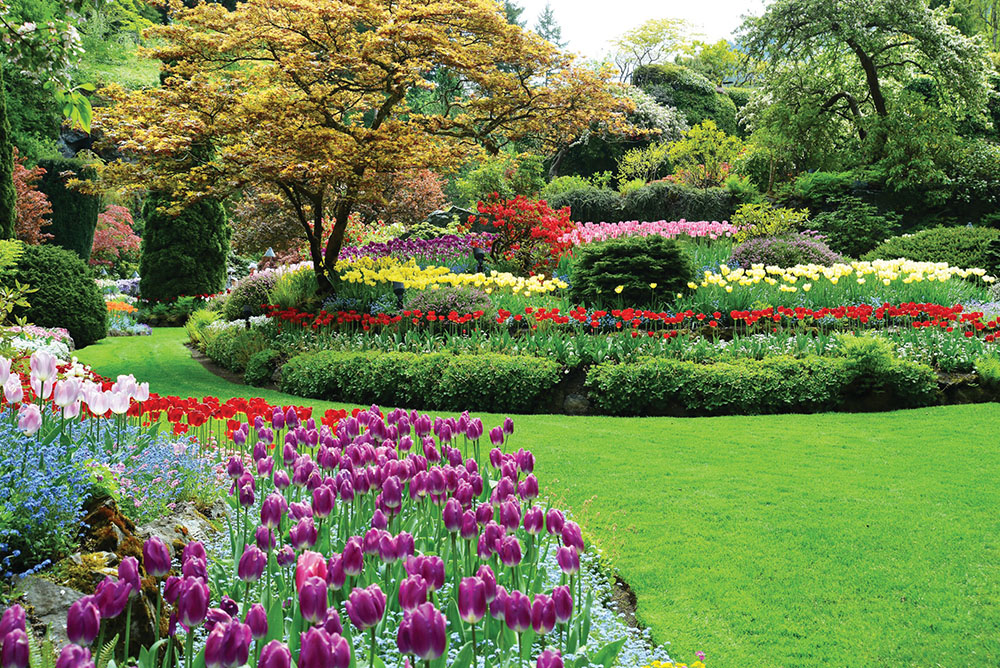 Can you say colour? Over 160 varieties of tulips bloom in spring at the Butchart Gardens.