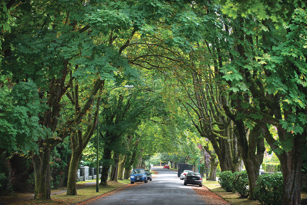 A maple-filled avenue in First Shaughnessy, Vancouver.
