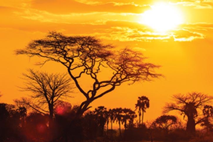 Serengetti