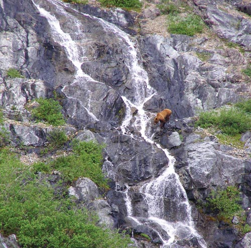 A grizzly crosses a waterfall; Exploring the insides of a glacier.