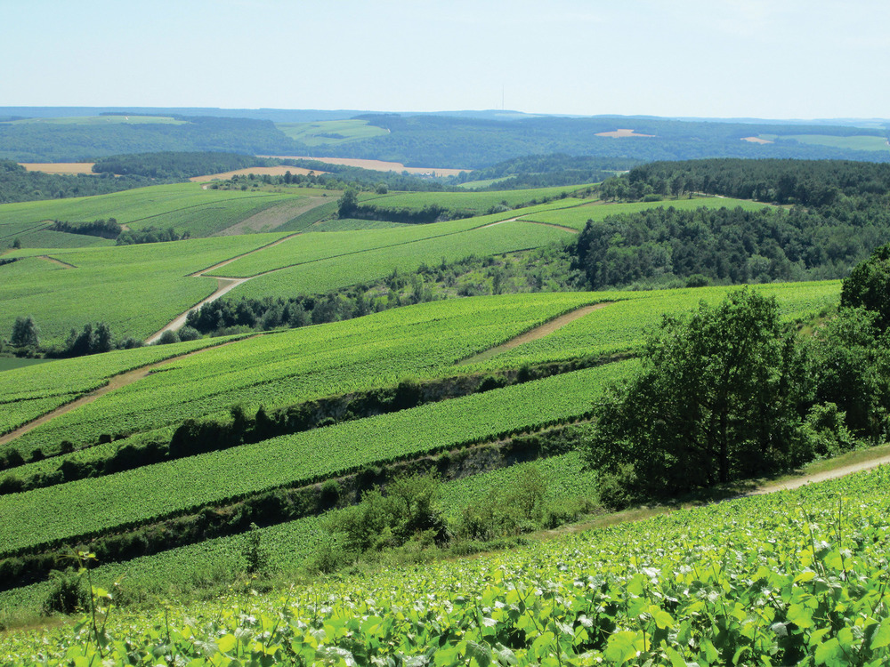 The drive from Paris to Reims is beautiful, through small rural villages and verdant rolling hills. CRTCA
