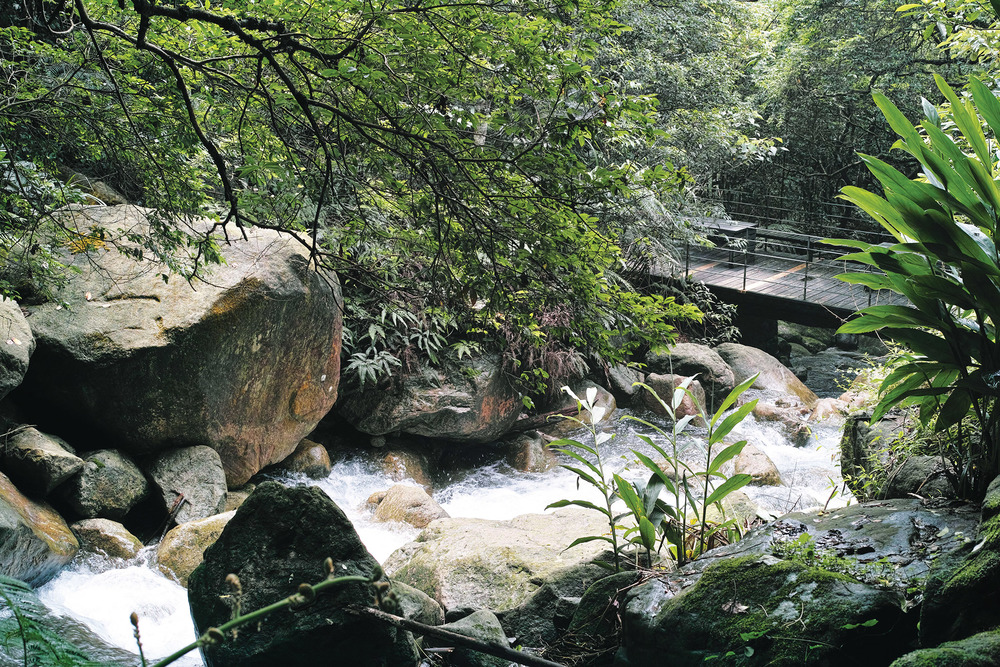 The tranquil surroundings are dappled with creeks, walkways and wooden bridges