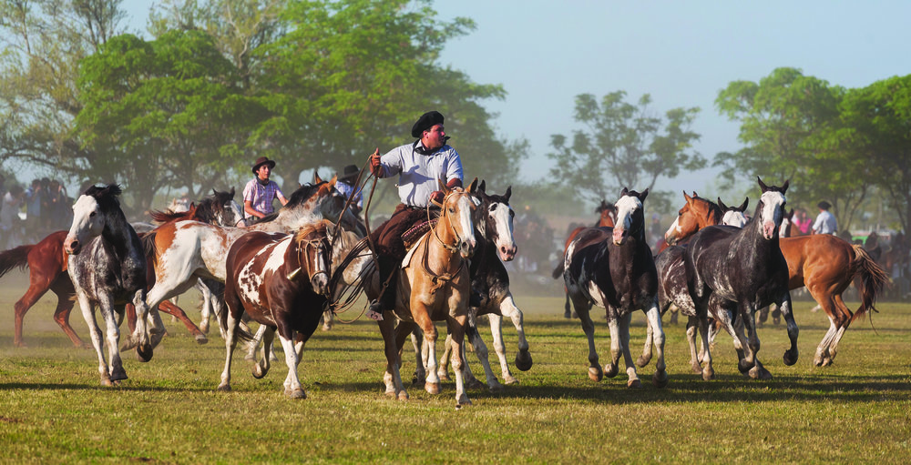 Horsemanship is in the DNA of the Argentine gaucho, so it comes as no surprise they lead the world in raising and training polo ponies which can take from six months to three years. sunsinger / Shutterstock.com