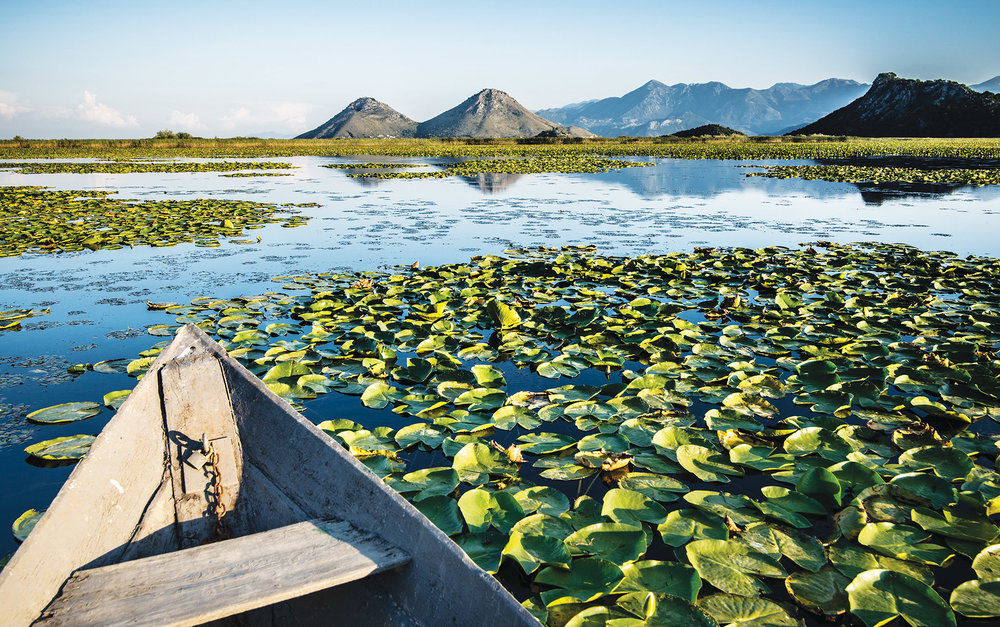 You can float through the abundant lily pads on Skadar Lake. Koni Kaori / Shutterstock.com