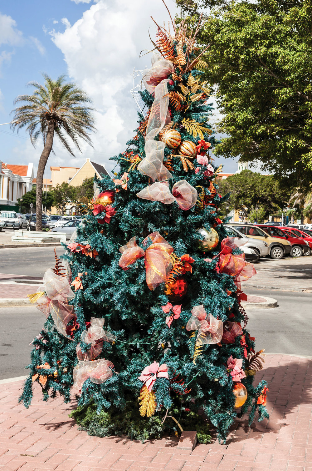 Christmas trees mingle with palm trees in Willemstad, Curaçao.