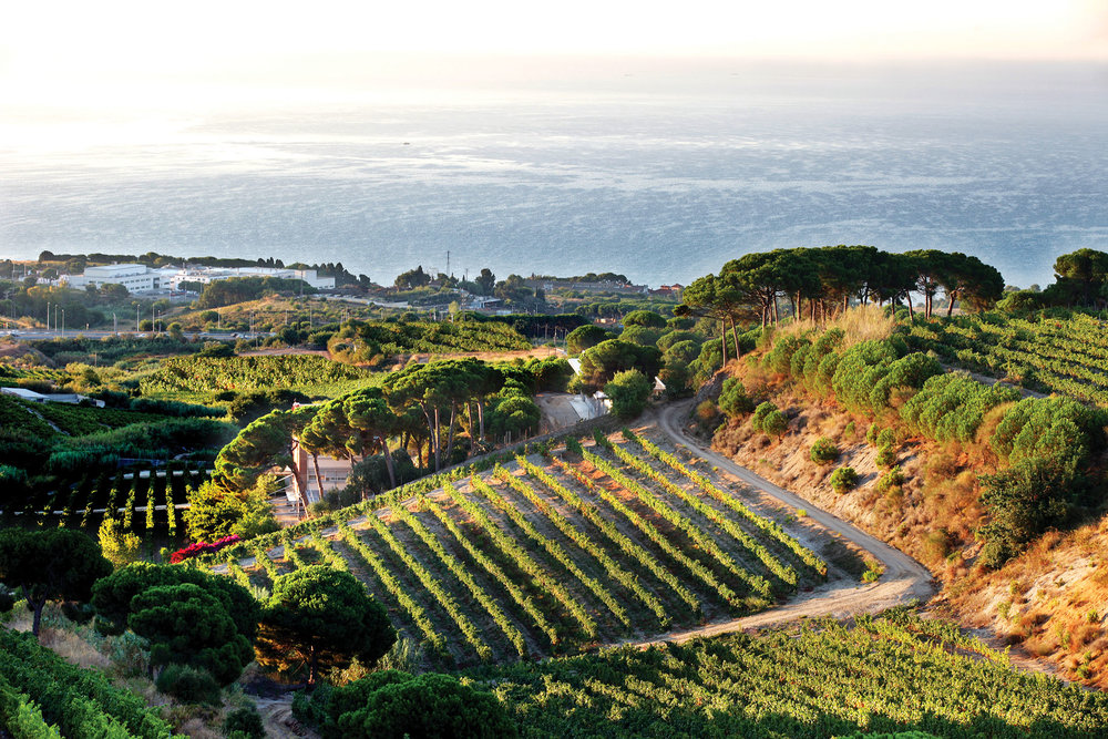 The fields of Alta Alella are beautifully positioned between the mountains and the Mediterranean Sea.