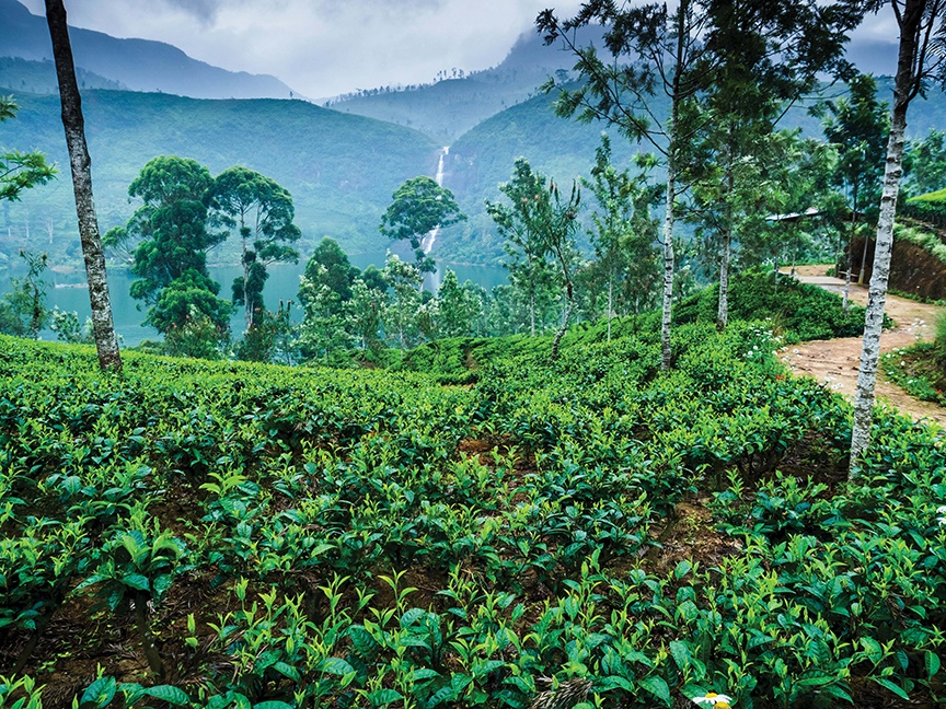 High in the mountains of Sri Lanka, a lush tea plantation stretches towards a giant waterfall in the background.