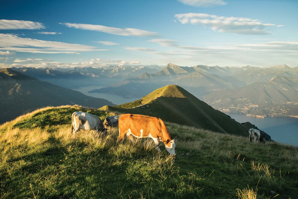 Cows graze on the mountaintops above the lake.  Aleks Kend / Shutterstock.com