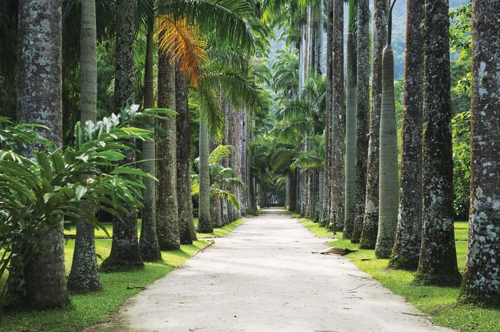 Palm trees line the avenue in the Jardim Botânico.