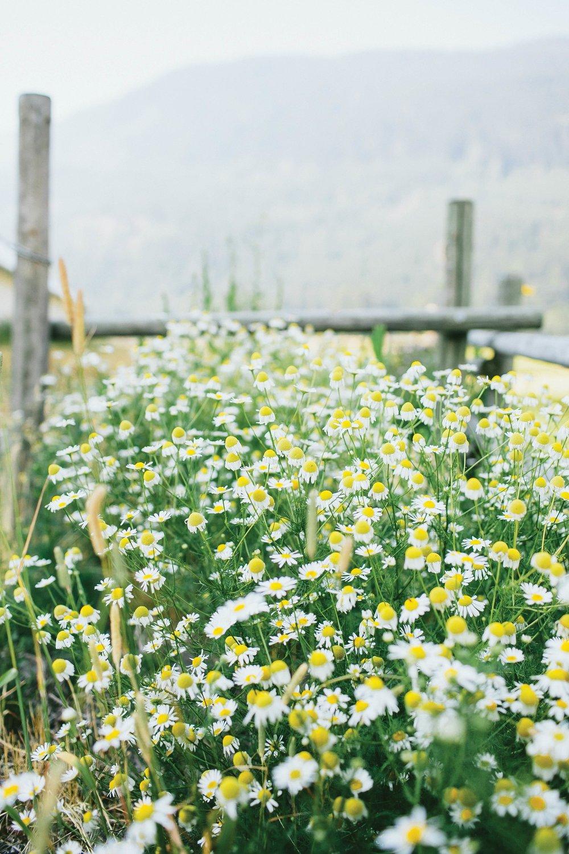 Martha Sturdy's farm in Pemberton.Photography by Claudette Carracedo;