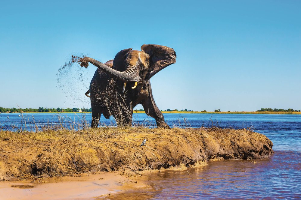 "Chobe National Park (known as the ""Land of the Giants"") is most famous for its large herds of magnificent elephants. kavram / Shutterstock.com"