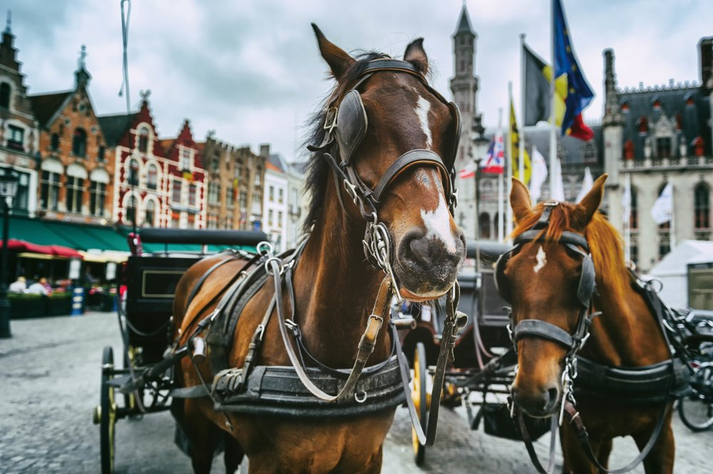 Horse-drawn carriages trot through the Christmas square.  symbiot / Shutterstock.com;