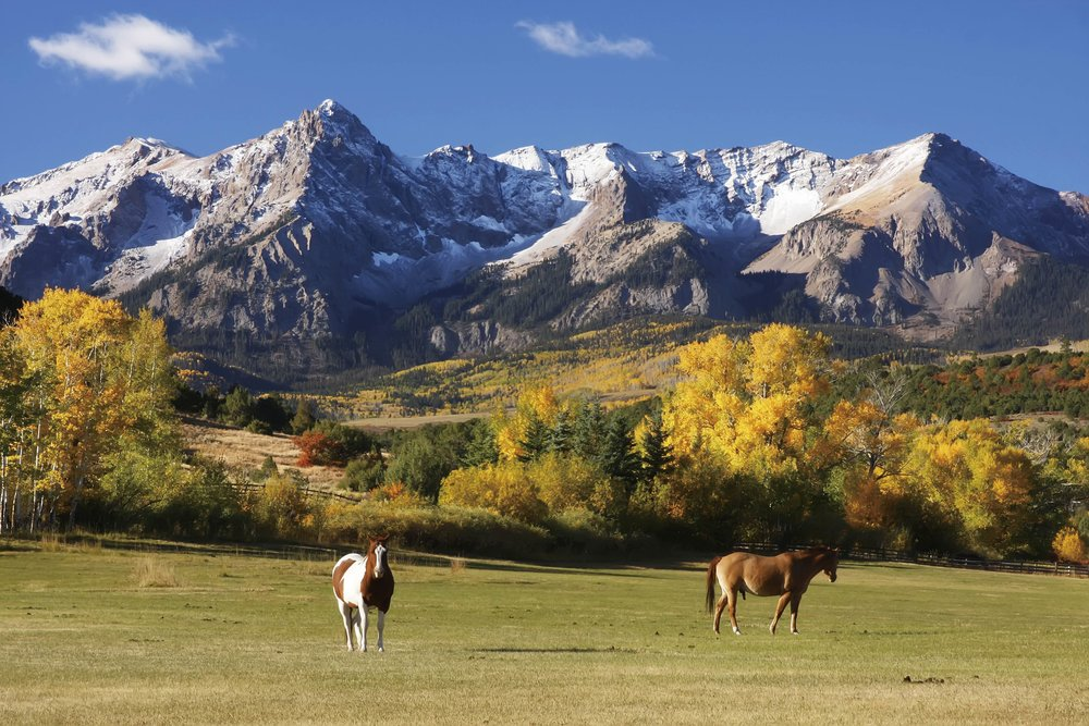 Horses graze in Uncompahgre National Forest.Don Mammoser / Shutterstock.com