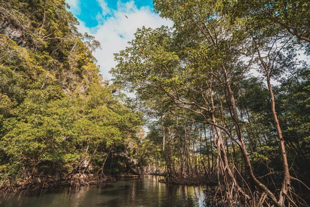 The quiet and scenic mangrove forest is just one of the many natural scenes enjoyed while travelling by boat in Los Haitises National Park.Photography by Nick Argires