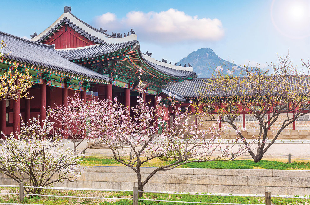 Cherry blossoms add to the beauty of Gyeongbokgung Palace in the spring.