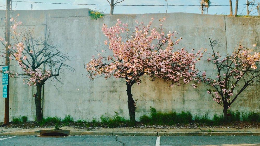 flowers pink spring