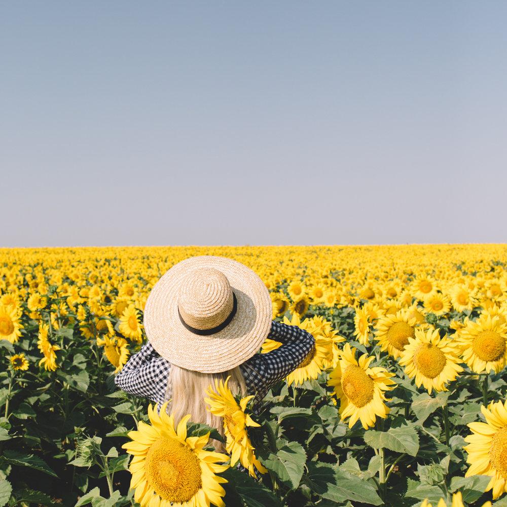 Sunflower-2820.jpg