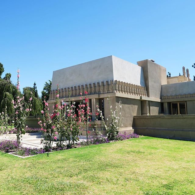 Hollyhocks are in full bloom! • Frank Lloyd Wright's Hollyhock House (1919-1921) stands in East Hollywood's Barnsdall Art Park as FLW's first design commission in Los Angeles – and in SoCal at large – marking it a significant benchmark in SoCal modern residential architecture. 🌸🌷💐☀️🎭🎨🎻
