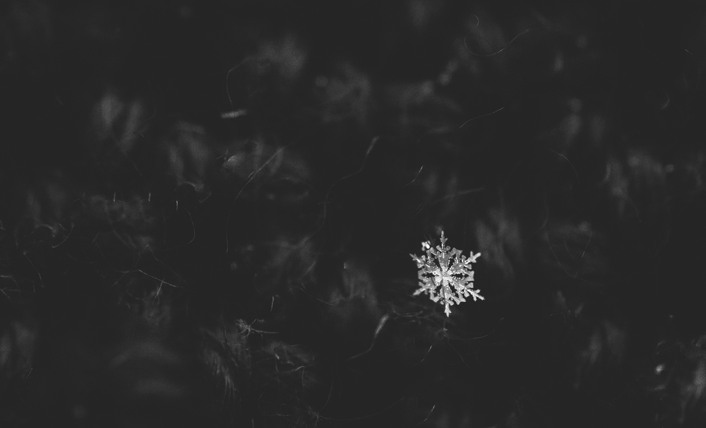 19/366 Snowflakes are just a BIT harder to photograph than I originally though.
