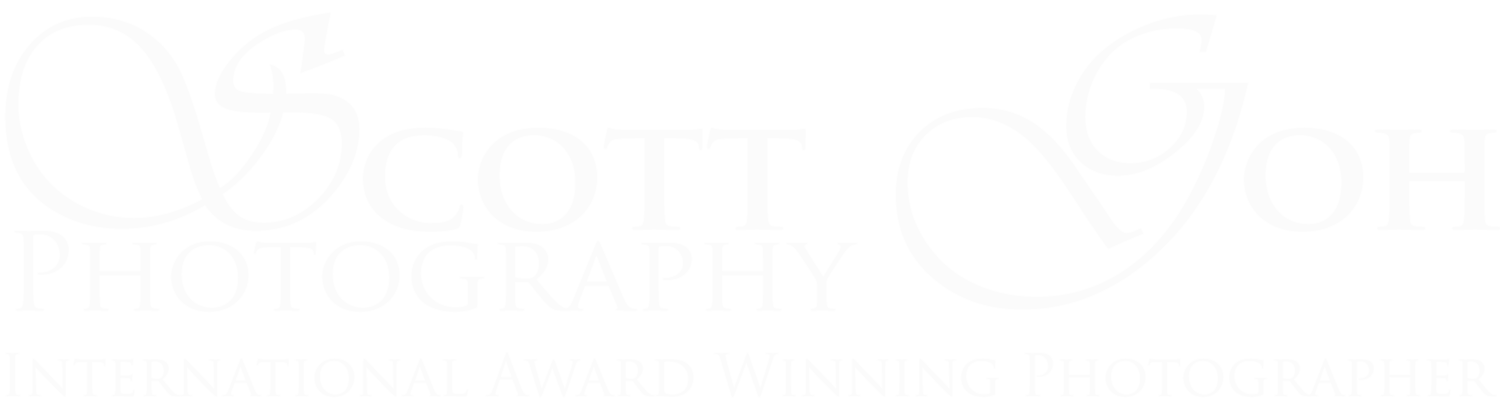 ​Best Wedding Photographer in Adelaide | Scott Goh Photography