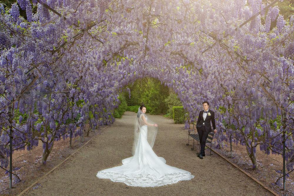 botanic garden adelaide wedding wisteria