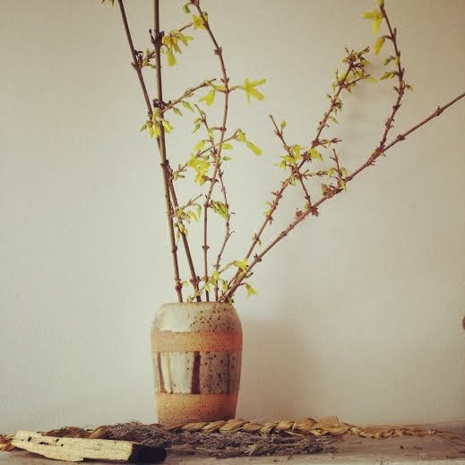 Just took a few days in the studio for these forsythia branches to start blooming