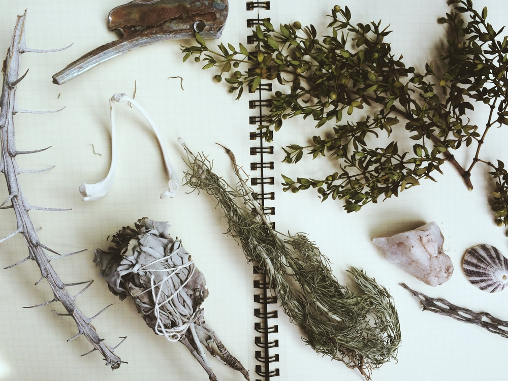 A few treasures from the road, including ocotillo spines, creosote and white sage.