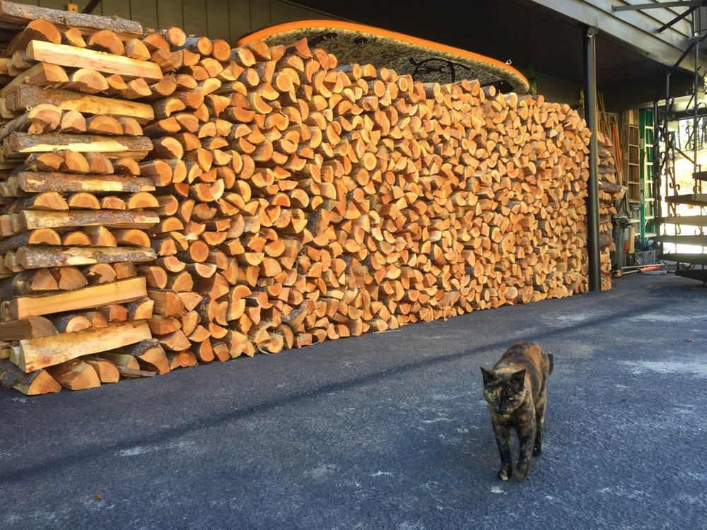 Inspector Cracker checking the woodpile....
