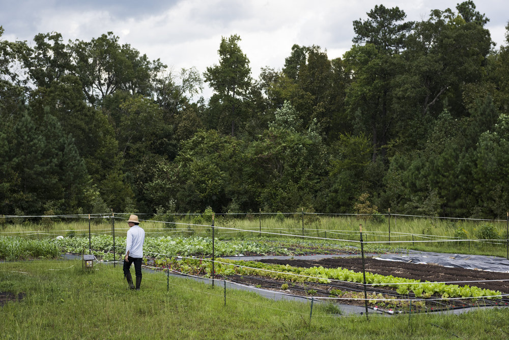 "Roberto Copa Matos walks through his farm, Terra Secca, in Hillsborough, NC. Matos, originally from Cuba, studied biochemistry in the University of Havana but immigrated from the island in 2002. ""It has always been my dream to have my own farm and work the land,"" says Matos."