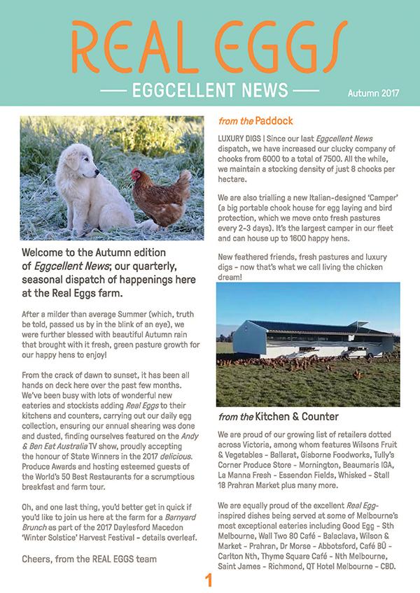 real eggs  print newsletter