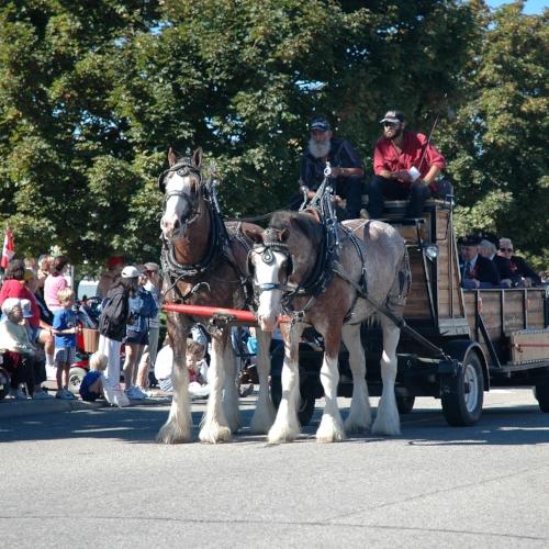 Clysdale Horses.jpg