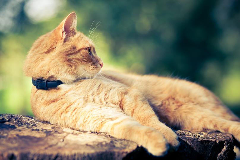 APB_cats.jpg