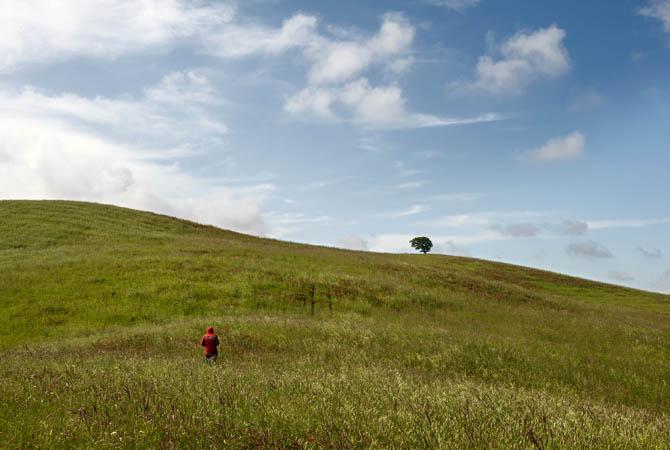Fattoria-Barbialla-Nuova-landscape
