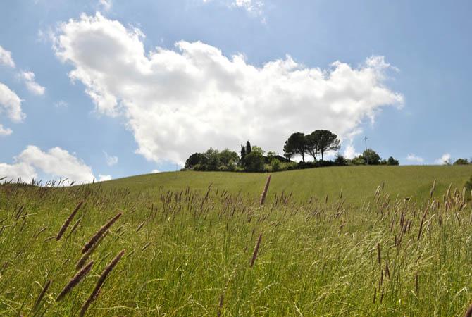 Barbialla-Nuova-Tuscan-Landscape