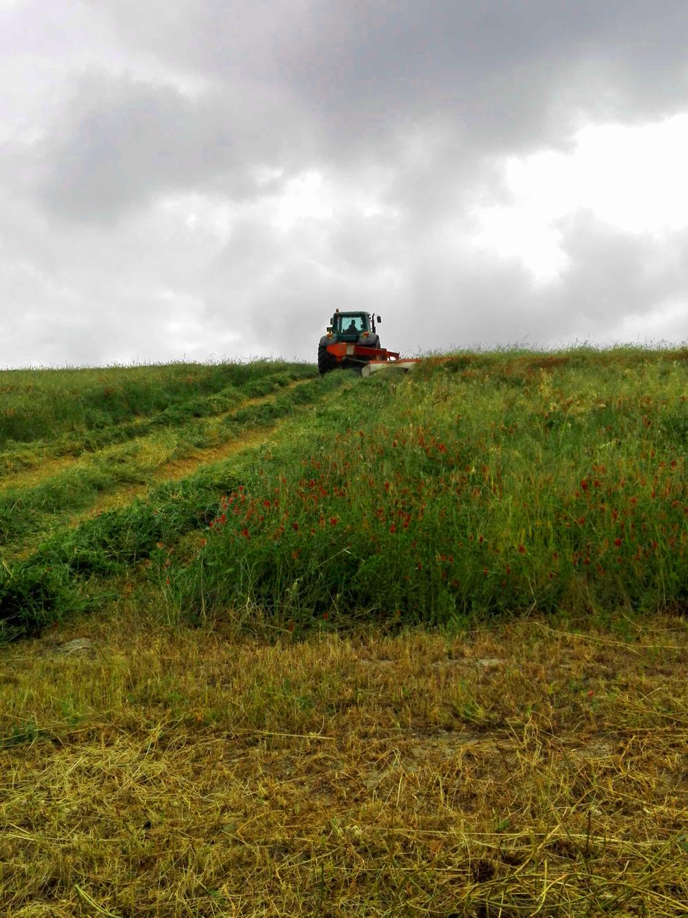 Barbialla-Nuova-hay-harvest