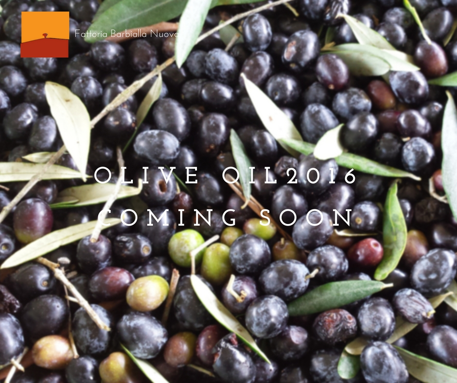 Organic olives harvested in 2016. Microfiltered organic olive oil from Barbialla Nuova