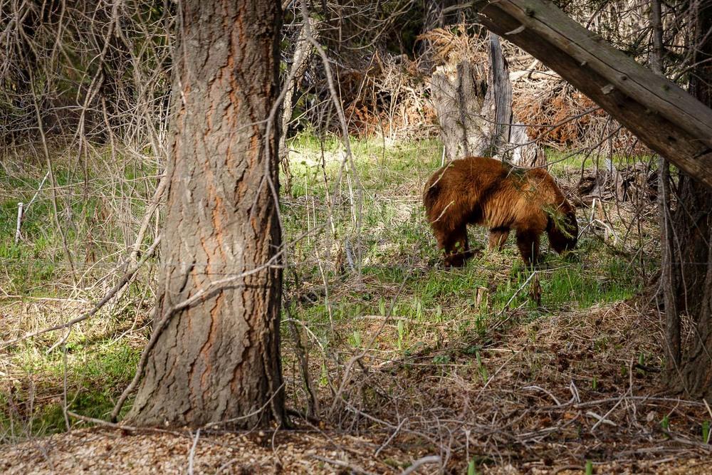 Prvič v življenju sem se v živo srečal z medvedom v naravnem okolju.