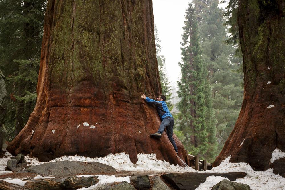 V gozdu z gigantskimi sekvojami stvari postaviš v perspektivo. Kot človek proti naravi, se počutiš zelo, zelo majhnega!